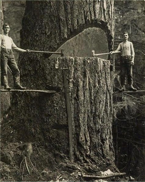 Logging in old times, 1910